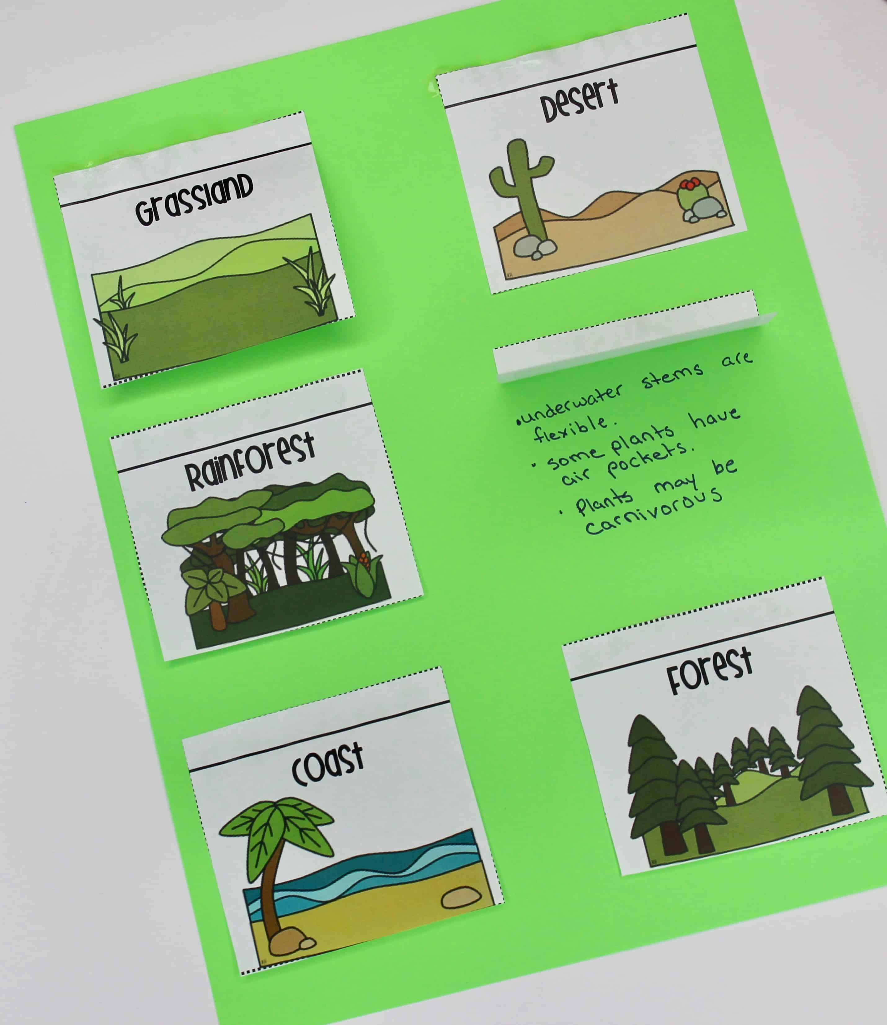 Animal Adaptations Lessons & Activities - Ashleigh's